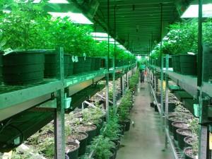 majano abogados cannabis