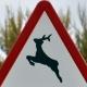 Responsabilidad de los cotos de caza en caso de atropellos de fauna salvaje