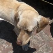 Condenada a 6 meses de cárcel por dejar morir a su perro sin alimento ni agua
